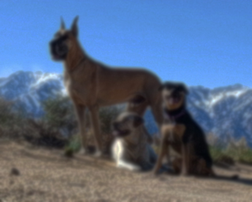 Unleashed Dog Training Az