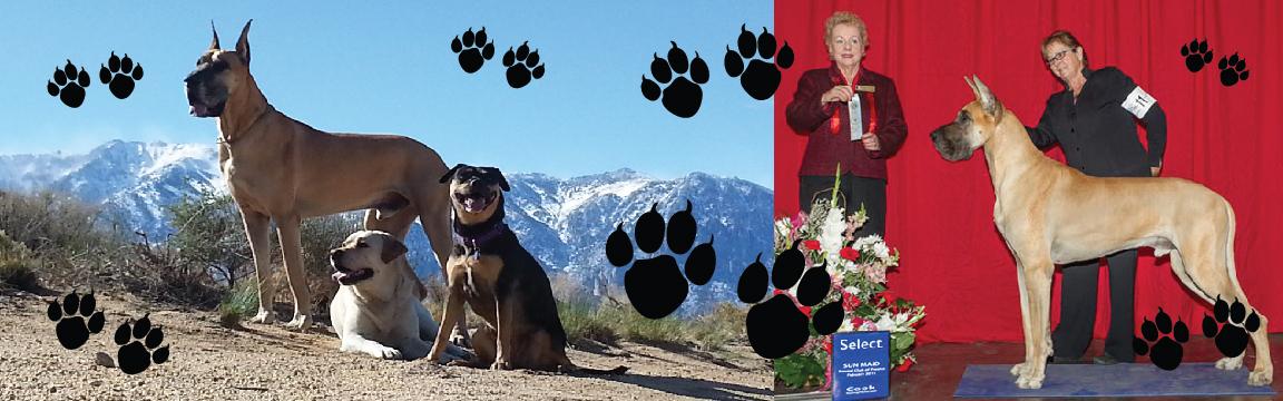 Dog Training Verde Valley